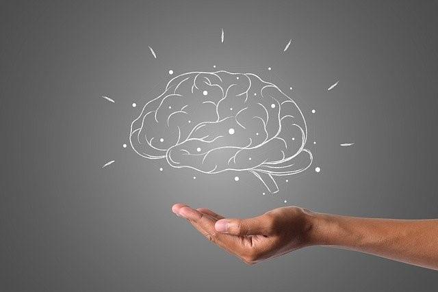 cerveau_alimentation_concentration